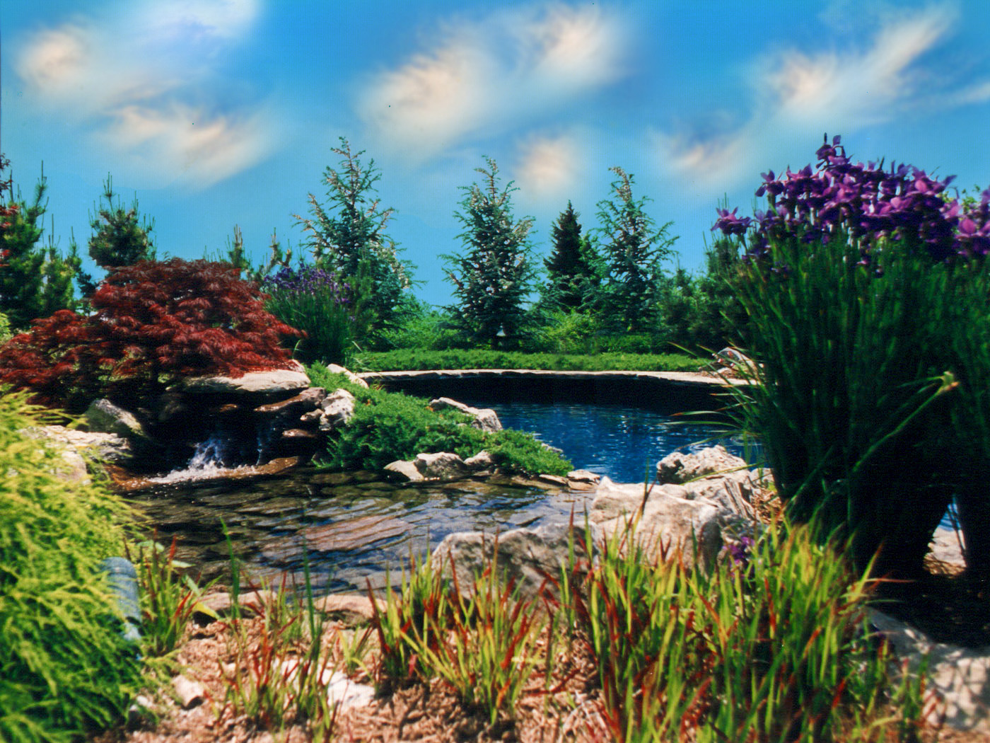 Natural pool and pond and stone waterfall with exotic planting in Sands Point