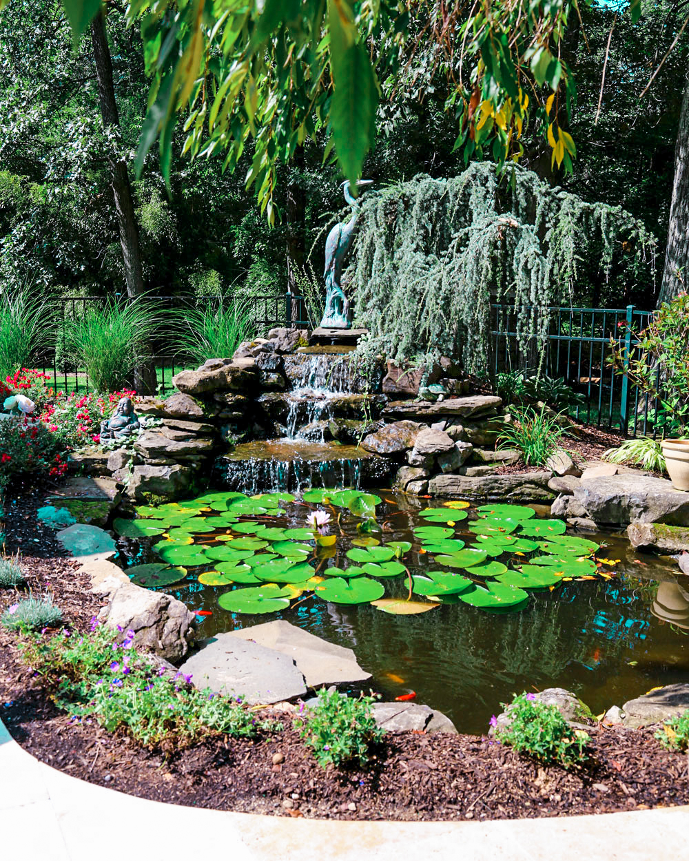 Koi fish pond with stone waterfall and bluestone walkway in Cold Spring Harbor